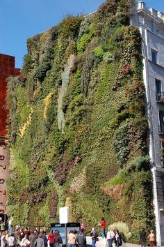 Vegetalizados telhado e jardim terraços