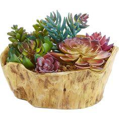 Pier 1 Imports Multi-colored Colorful Faux Succulent Arrangement (32 CAD) ❤ liked on Polyvore featuring home, home decor, floral decor, plants, flowers, fillers, decor, multicolor, flower arrangement and flower centerpieces