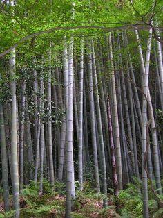Bambus - http://www.semena-rostliny.cz/26-bambusova-seminka