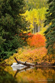Fall color in Icicle Creek Canyon, Wenatchee National Forest, near Leavenworth, Washington
