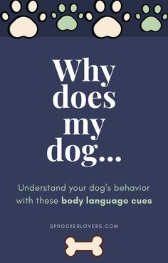 Understand your dog's emotion with these dog body language cues. Sprocker Spaniel Puppies, Games For Puppies, Dog Emotions, New Puppy Checklist, Dog Enrichment, Dog Body Language, Black Cocker Spaniel, Puppy Stages, Spaniel Breeds