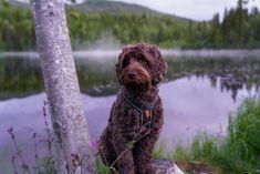 DSC05921   Einar Frostad   Flickr Dog Pictures, Dogs, Photography, Photograph, Pet Dogs, Fotografie, Doggies, Photoshoot, Fotografia