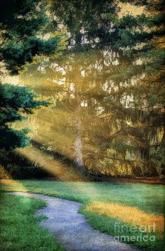 ✮ A path that leads to beautiful rays of light on a cool early morning
