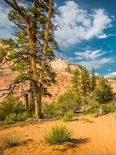 Hiking In Zion National Park (Utah) - PhotoTraces Zion National Park, National Parks, Travel Pictures, Travel Photos, Hiking Photography, Photography Ideas, Family Travel, Girl Travel, Van Life