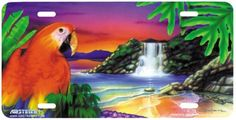 parrot in paradise license plate Novelty License Plates, Parrot, Paradise, Bird, Parrot Bird, Birds, Parrots, Heaven