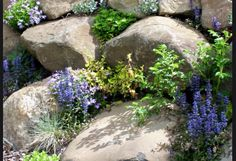Lobelia and native ground covers