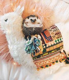 Pip the Hedgehog (@pip.thehedgehog) • Instagram photos and videos