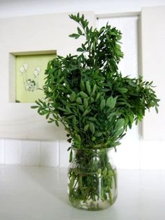 try to dind a plant to grow & keep sprig near fruit bowl/kefir; 10 Best Posts on Getting Rid of Fruit Flies & Fruit Fly Traps
