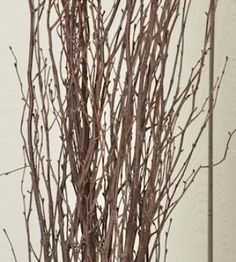 Natural Decorative Birch Branches - a great statement piece or vase filler by themselves, or use them mixed into a flower arrangement or centerpiece. Easter is coming, how are you going to decorate? DriedDecor.com #easterdecor #springdecor #birchbranches
