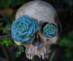 Succulents in skull... Like the plant.. not the planter