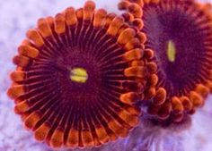 Live Coral Via macro lens. Not quite a microscope, but close enough!