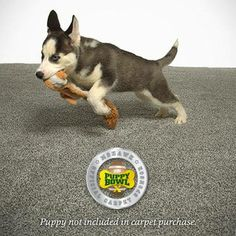 Mohawk's SmartStrand was the official carpet of #PuppyBowl X! What makes it so special? It's the only carpet with built-in stain and soil protection that never washes or wears off, which means it can handle a mess. Plus, it's incredibly durable and super soft, making it perfect for all the puppy pouncing and paws-ing for naps. #sharemolove