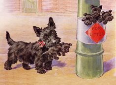 Scottish Terrier Charming Scottie Dog Greetings Note Card Puppies In Litter Bin