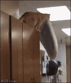 Nailed It! - World's largest collection of cat memes and other animals Love Quotes Funny, Cat Quotes, Best Funny Pictures, Funny Images, Kittens Cutest, Cats And Kittens, Funny Animals, Cute Animals, Happy Animals
