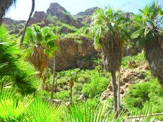 Cañon de Nacapule, San Carlos, Nuevo Guaymas. Sonora, Mexico (Sonoran Desert)