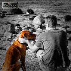 #Pinterest ¿Sabías que un perro es capaz de percibir el estado de humor de un humano? Solo haz que el sepa que tu eres feliz.