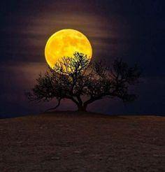 tree image by Monica Diaz. Find more awesome sunset images on PicsArt. Beautiful Photos Of Nature, Beautiful Moon, Nature Photos, Beautiful Scenery, Beautiful Places, Le Talent, Mystic Moon, Shoot The Moon, Moon Shadow