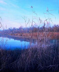 Sunset among the reeds Oil on canvas 40x48in