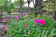 Ten easiest flowers to grow in Ok.