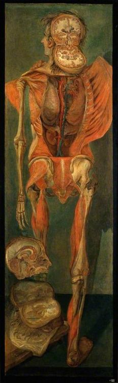 A Standing Dissected Man, Posterior View, with Separate Sections of the Brain by Jacques-Fabien Gautier D'Agoty Date painted: 1764/1765 Oil on canvas , 203 x 65 cm Collection: Wellcome Library