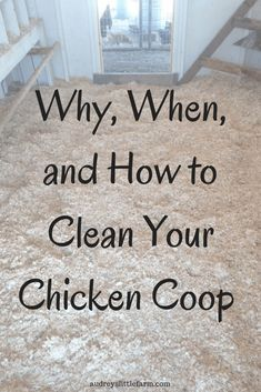 Clean your chicken coop now for the benefit of your chickens. Learn how easily y… Clean your chicken coop now for the benefit of your chickens. Learn how easily you can do it and why it is important for your chickens health.