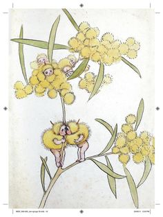 May Gibbs' Wattle Babies. May Gibbs is one of Australia's best loved classic children's book writers and artists. Australian Animals, Australian Artists, Children's Book Illustration, Botanical Illustration, Flower Illustrations, Digital Illustration, Botanical Drawings, Botanical Art, Australia Day