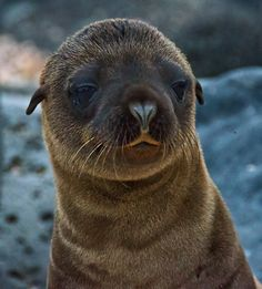 Google Image Result for http://img.fotocommunity.com/images/Mammals/Ocean-Mammals/Baby-Sea-Lion-a23751029.jpg