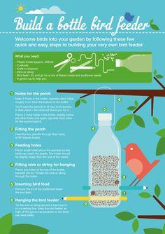 Build a bird feeder