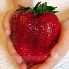 ADB Inc Rarest Heirloom Super Giant Japan Red Strawberry Organic Seeds