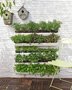 Ook op een balkon kun je groenten en kruiden verbouwen, gebruik een kas, ga de hoogte in en tuinier verticaal of gebruik allerlei potten.