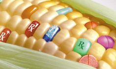 GMOs are surrounded in myth, find the truth here