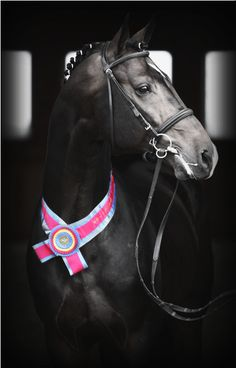 Coeur d'Amour, standing at High Point Hanoverians. A very handsome fellow, made more so by the desaturation in this photo.