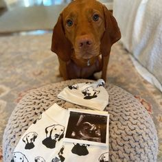 Baby Items For Dog Lovers (@monofaces) • Instagram photos and videos Baby Shower Themes, Baby Shower Gifts, Vizsla, Baby Items, Dog Lovers, Pitbulls, Babies, Gift Ideas, Photo And Video