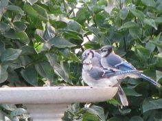 family at the birdbath...