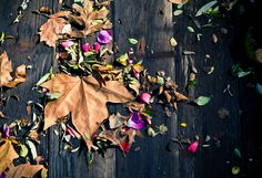 Feeling Fall on The BULLETIN at Terrain #leaves