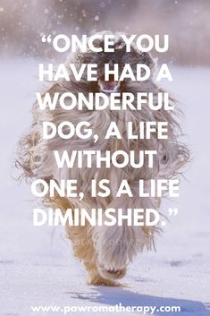 %i - PawromaTherapy/Holistic Pet Information and Pet Health Products for Dogs and Cats Dog Care Tips, Pet Tips, Dog Quotes, Animal Quotes, Funny Quotes, Funny Dogs, Cute Dogs, Awesome Dogs, Pet Allergies