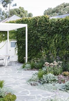 Boston ivy provides a lush green backdrop to this outdoor dining area at a cottage in Adelaide Outdoor Paving, Outdoor Tiles, Outdoor Areas, Big Garden, Garden Show, Garden Beds, Garden Path, Garden Paving, Sloped Garden