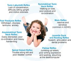 "Though I'm still not sold on ""unintegrated"" primitive reflexes in older children, I'm still reading what I can about it. Your Body Works: Central Nervous System - Chiropractic Specialist Brisbane Norman Park Pediatric Occupational Therapy, Pediatric Ot, Moro Reflex, Website Templates, Primitive Reflexes, Brain Stem, Vision Therapy, Vestibular, Sensory Issues"