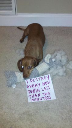 Dog Shame  - lucy does this!  Takes all the joy out of bringing home new toys.