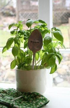 3 herbs to grow in your magical herb garden...