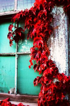 Autumn Ivy Window -red and turquoise