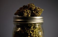 Marijuana - Gary Morrison/Getty Images.... Another attempt at the fascist regime at discrediting Marijuana