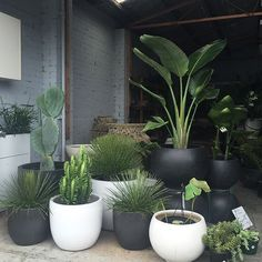 patio plants The Pot Warehouse, Mona Vale patioGarden is part of Plants - Potted Plants Patio, Indoor Plants, House Plants, Indoor Gardening, Fence Plants, Urban Gardening, Plants In Pots, Front Yard Plants, Walled Garden