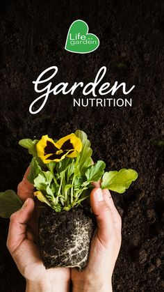 Successful growing is all about building a nutritious foundation first. #lifeisagarden #gardening #nutrition Life Isa, Back To Basics, Foundation, Herbs, Nutrition, Gardening, Healthy, Building, Plants