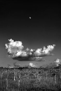 Clyde Butcher - Black and White Photographer. Saw many of his photos at the South Florida Museum - beautiful!