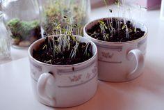 plants in teacups- cute! #diy #plants #teacups