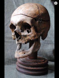 Antique articulated geriatric human skull