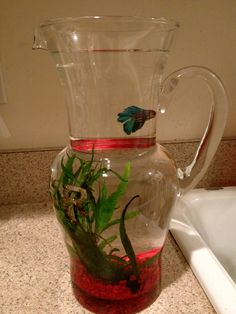 Betta need 2.5+ gallons, a place to hide, temperatures of 72-80 degrees Fahrenheit, and a filter. This doesn't provide any of those.