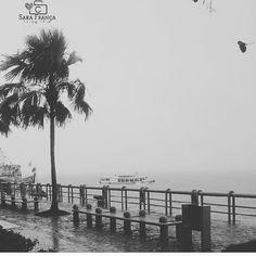 Autor: @sarinhafran7 . #mangueirosa #fotografebelem #belemphotos #belemempeb  #belem #belemdopara #belém #belémdopará #belempa  #cidademorena #cidadedasmangueiras #fotografando #clique #belemeuamoeucuido #fotografia #photograph #photooftheday #igers #click #braziliangallery #amazon #amazonia #br #turismo #tourism #gallery #moments #achadosdasemana #mtur #meubemmeupara .  Acesse: fb.com/mangueirosa