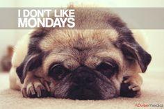 We don't like them either. #mondays #theworst #sorelatable